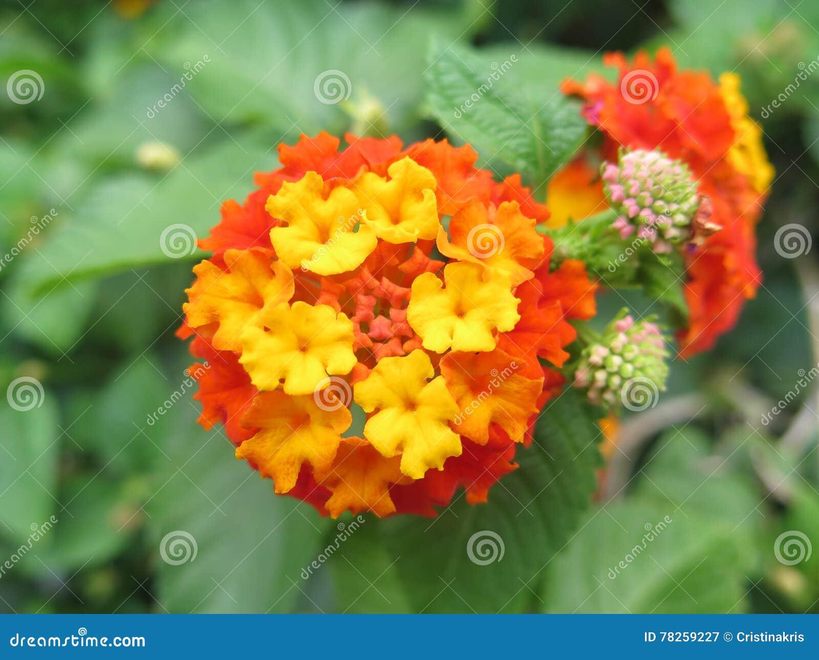 εξωτικά λουλούδια