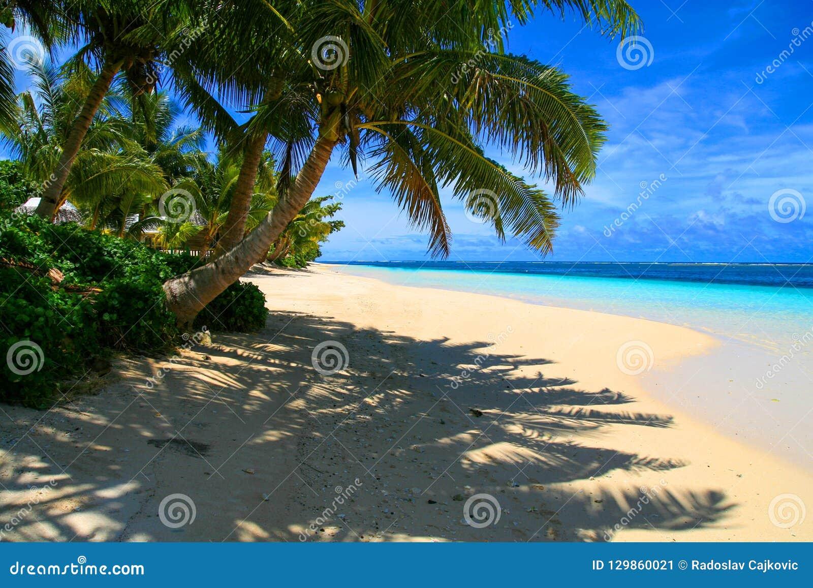 Εξωτικός προορισμός διακοπών, τροπικός φοίνικας επάνω από την ηλιόλουστη παραλία με τη σκιά στην άσπρη άμμο