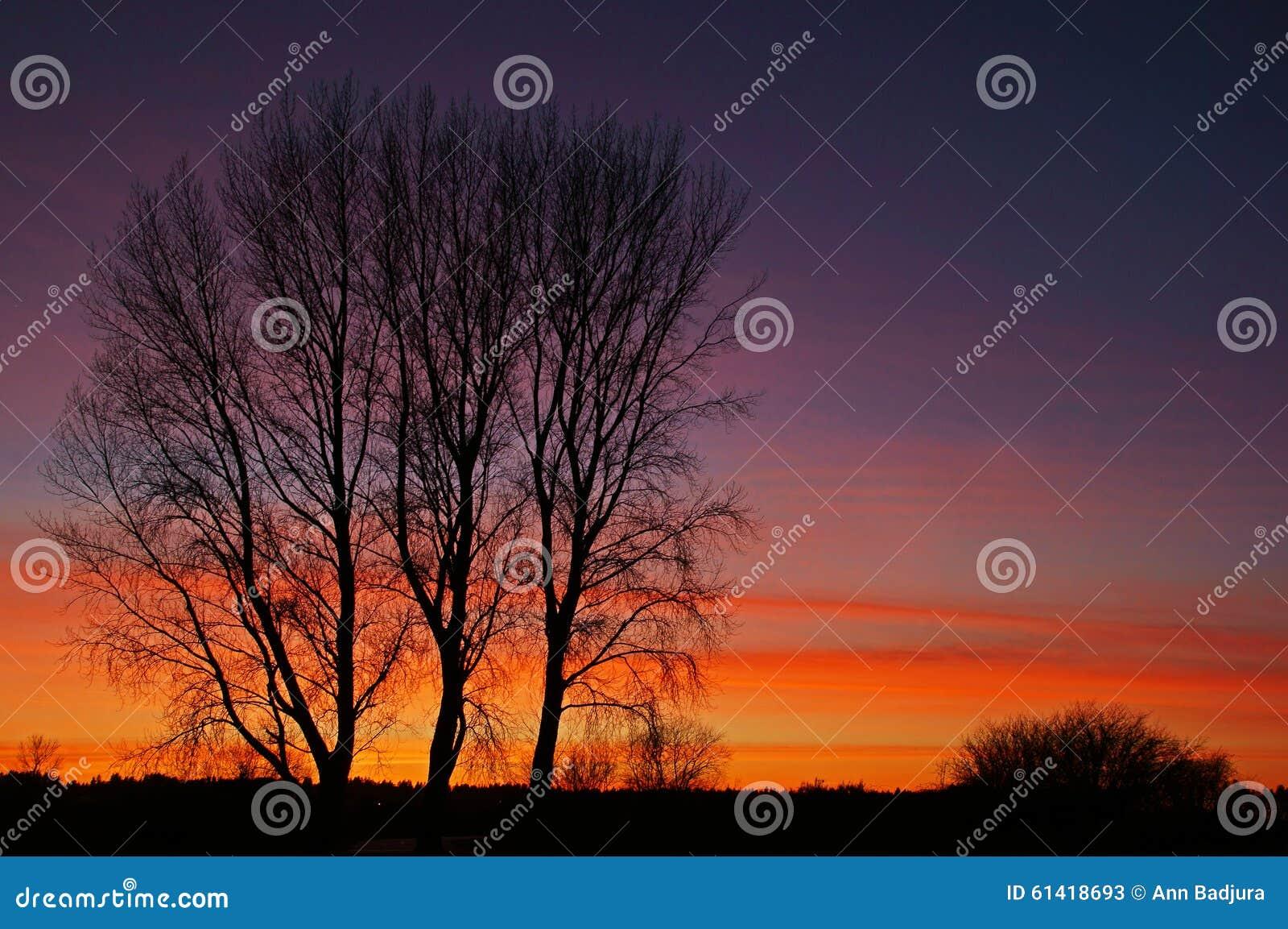επάνω από το φωτεινό χειμώνα ανώτατων δέντρων ηλιοβασιλέματος ήλιων γουνών κόκκινο