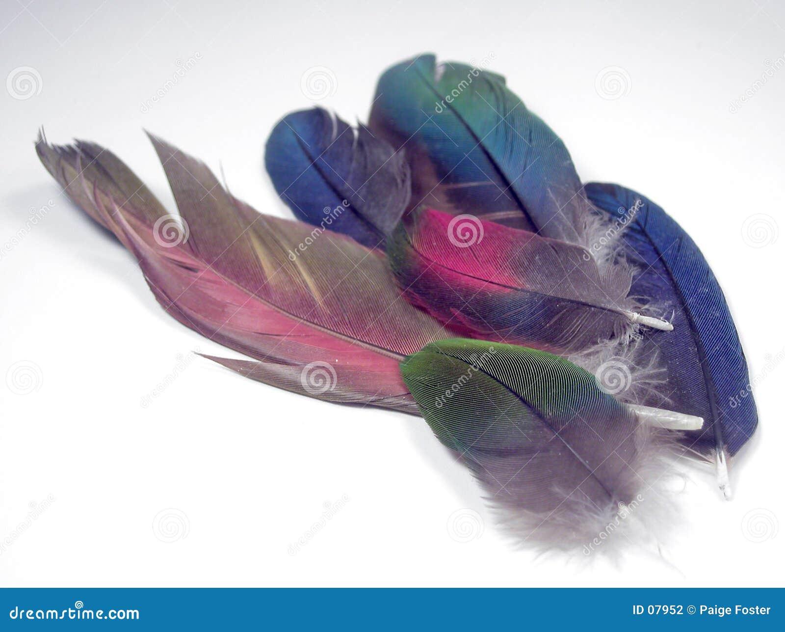 επενδύει με φτερά macaw