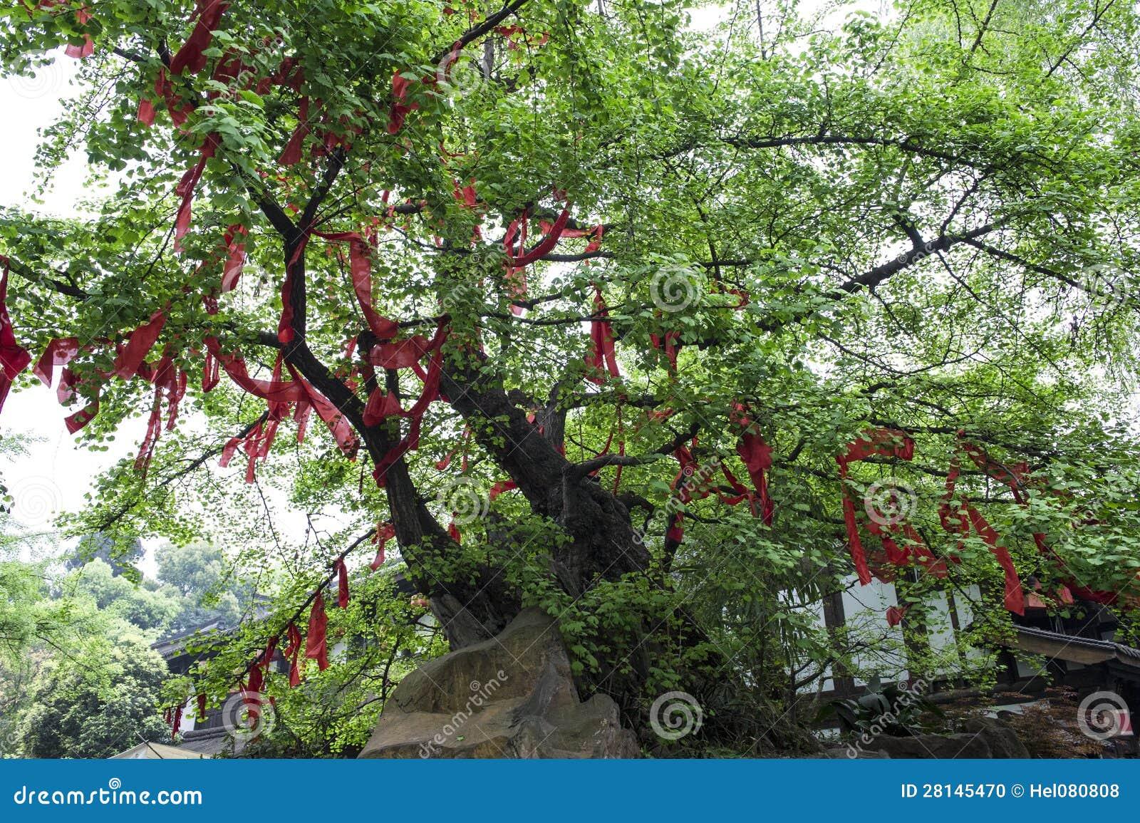 Επιθυμία του δέντρου