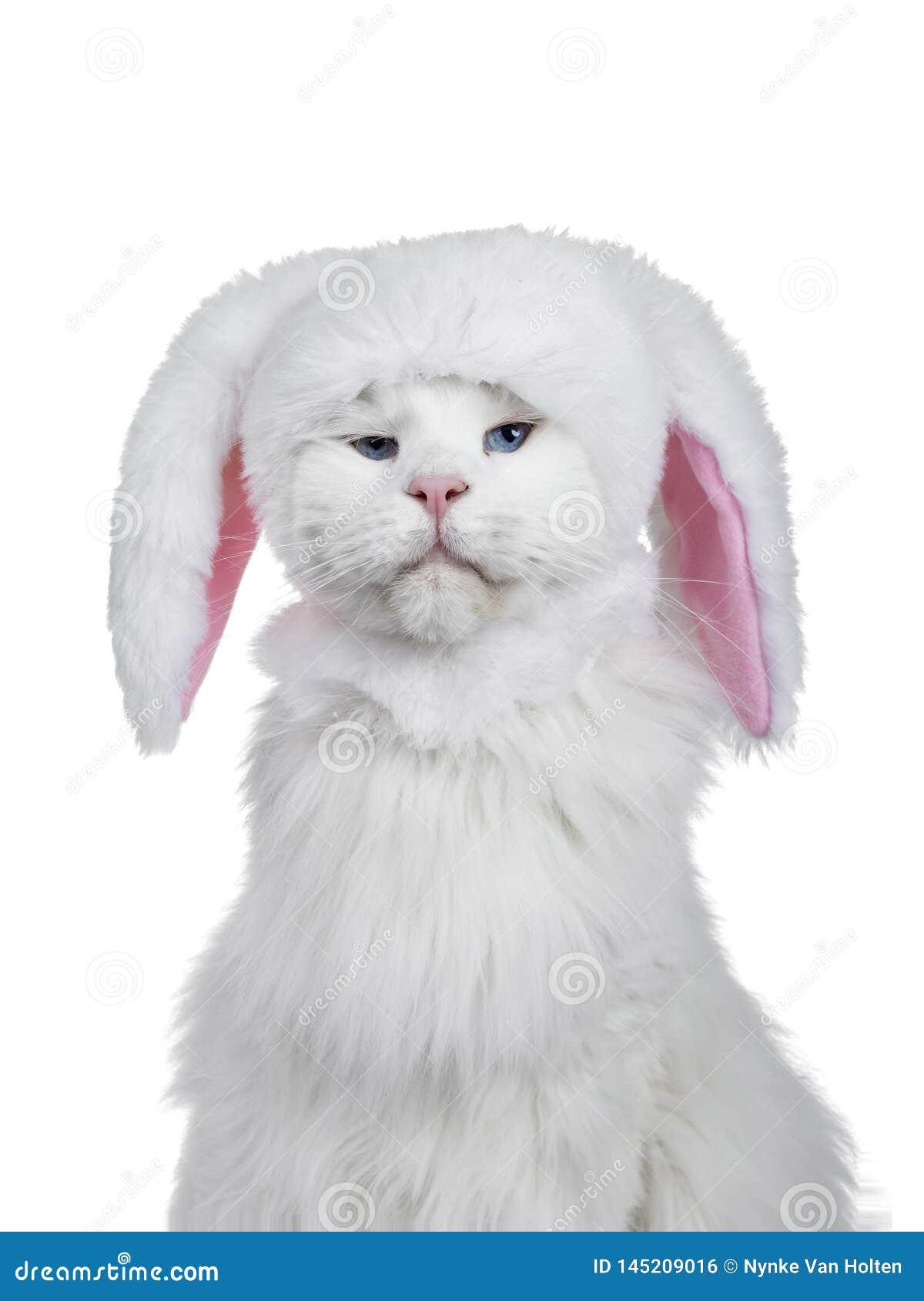 Επικεφαλής πυροβολισμός της γάτας που φορά το καπέλο λαγουδάκι