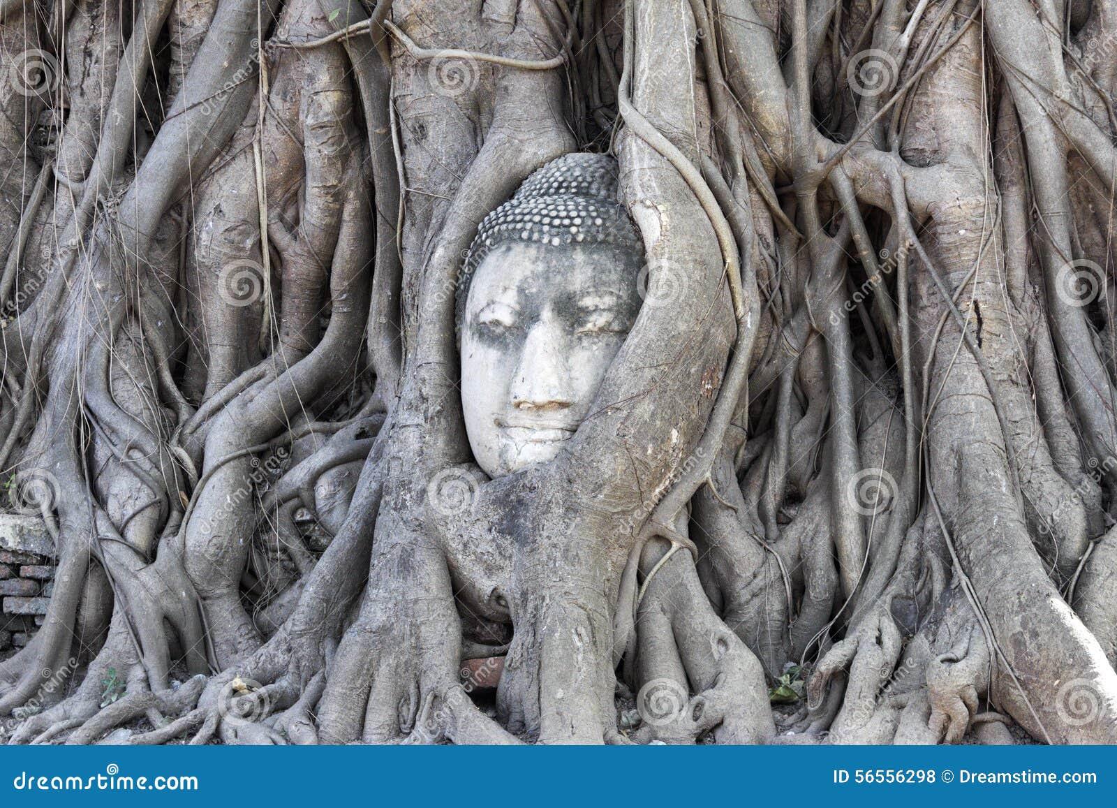 Download επικεφαλής δέντρο του Β&om στοκ εικόνες. εικόνα από χαμόγελο - 56556298