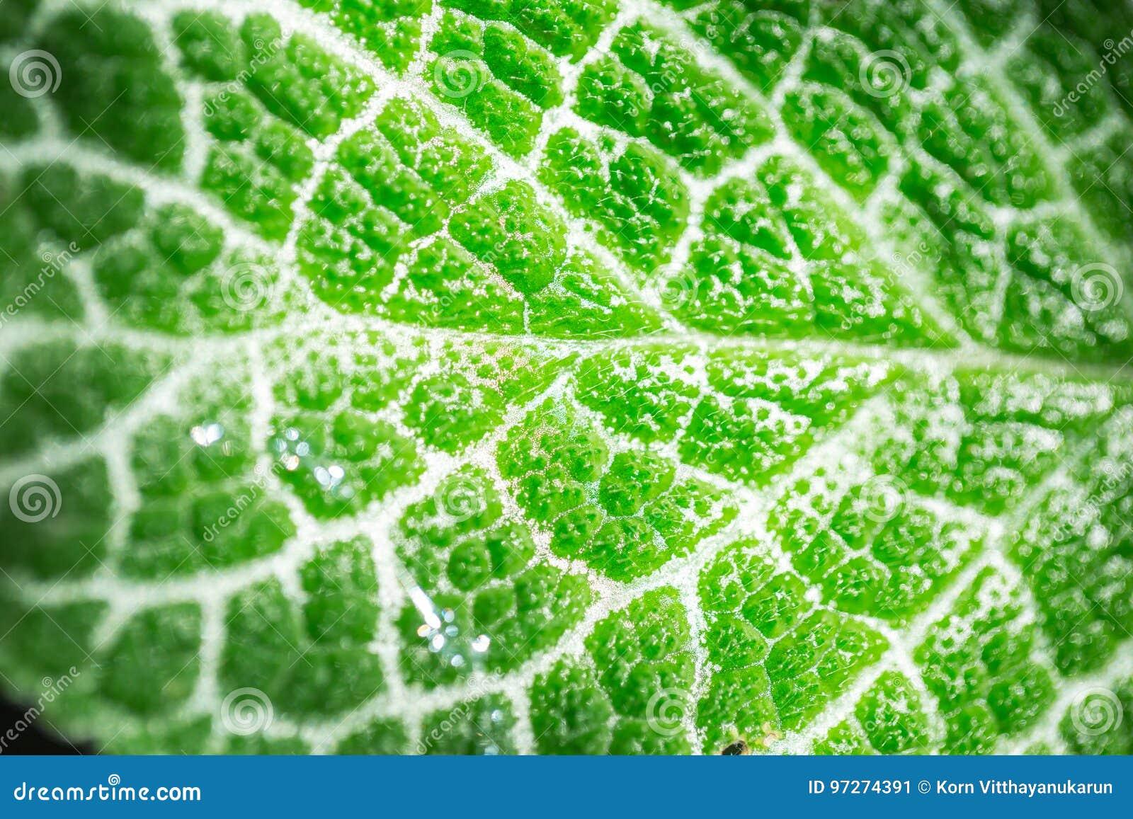 Επιστήμη της οικολογίας Πράσινη χλωροφύλλη σύστασης φύλλων κινηματογραφήσεων σε πρώτο πλάνο και διαδικασία της φωτοσύνθεσης
