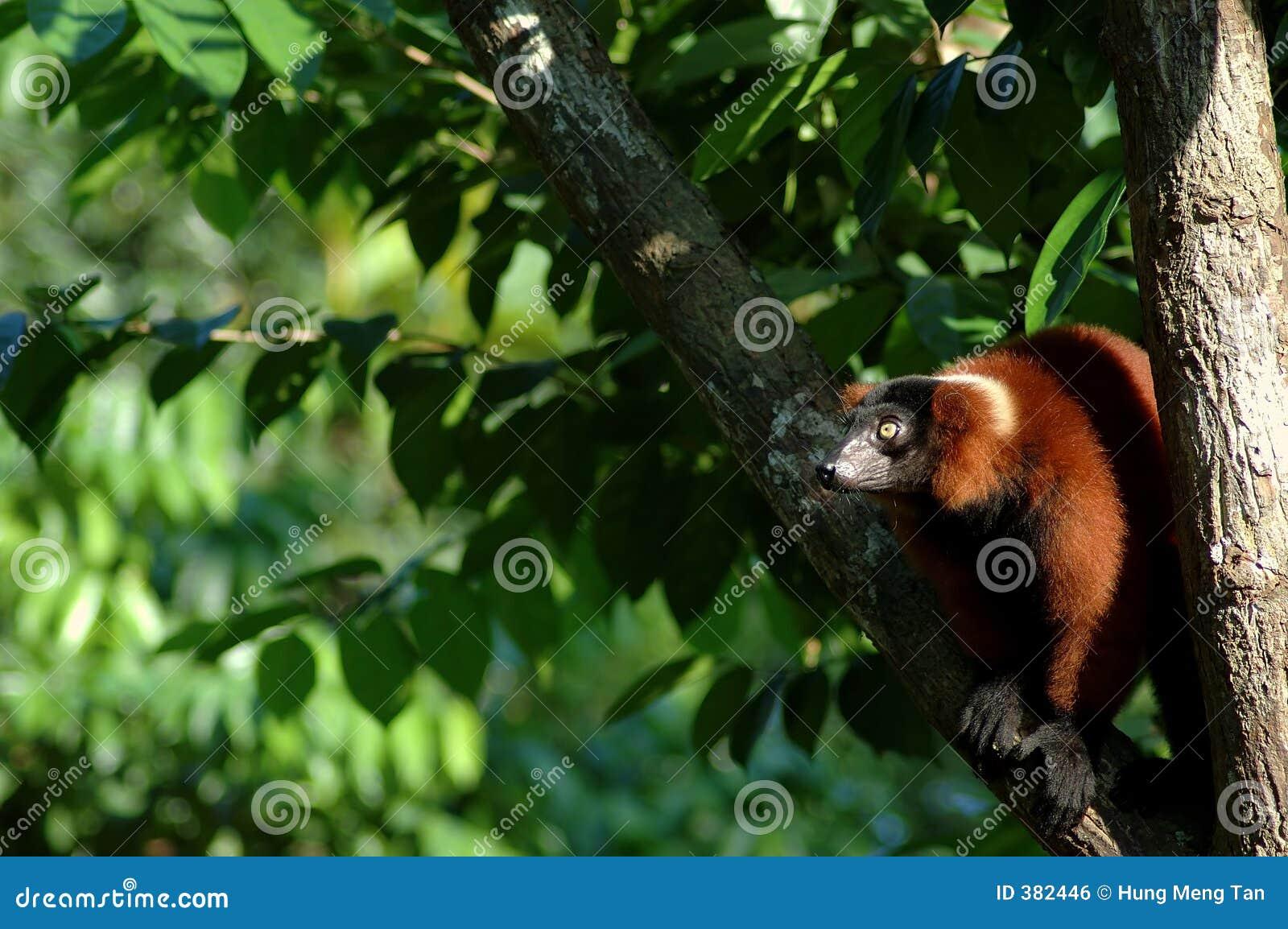 επιχειρησιακός πίθηκος