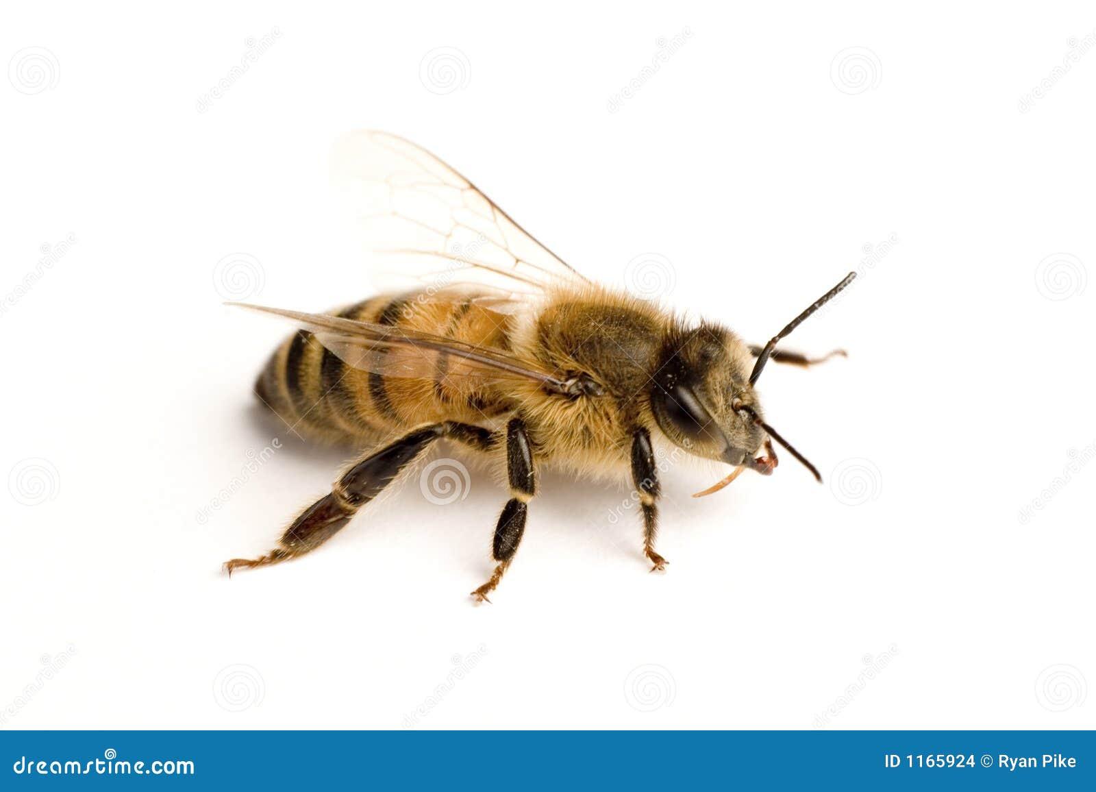 εργαζόμενος μελισσών