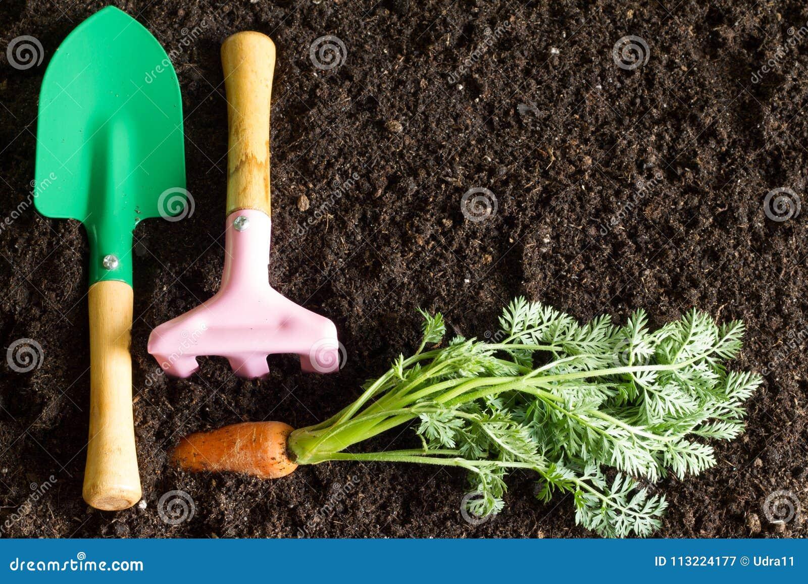 Εργαλεία και καρότο κήπων στο υπόβαθρο εδαφολογικών αφηρημένο άνοιξη