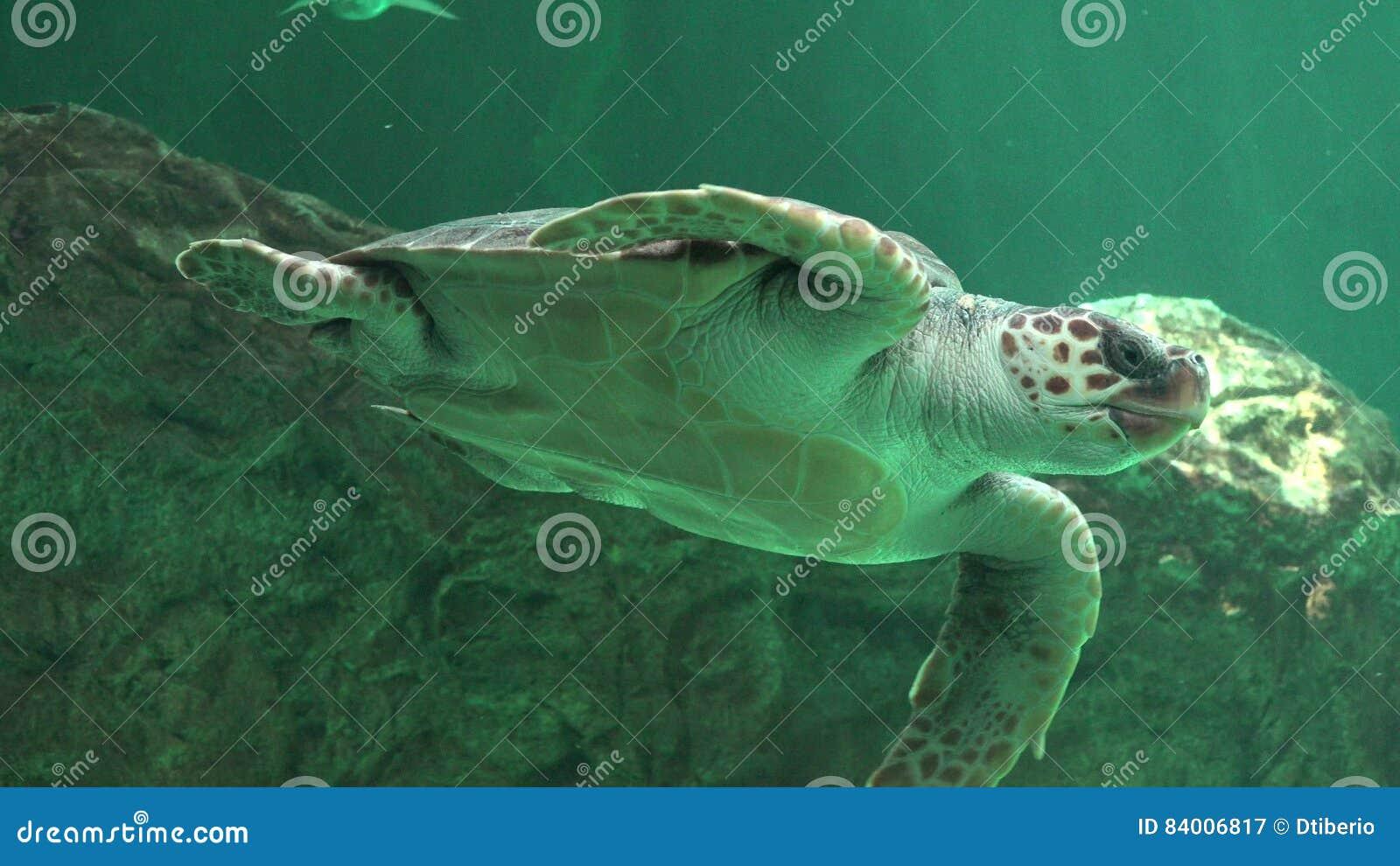 Ερπετά και χελώνες θάλασσας