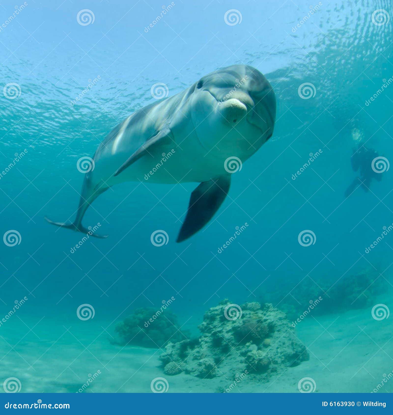 Ερυθρά Θάλασσα δελφινιώ&n