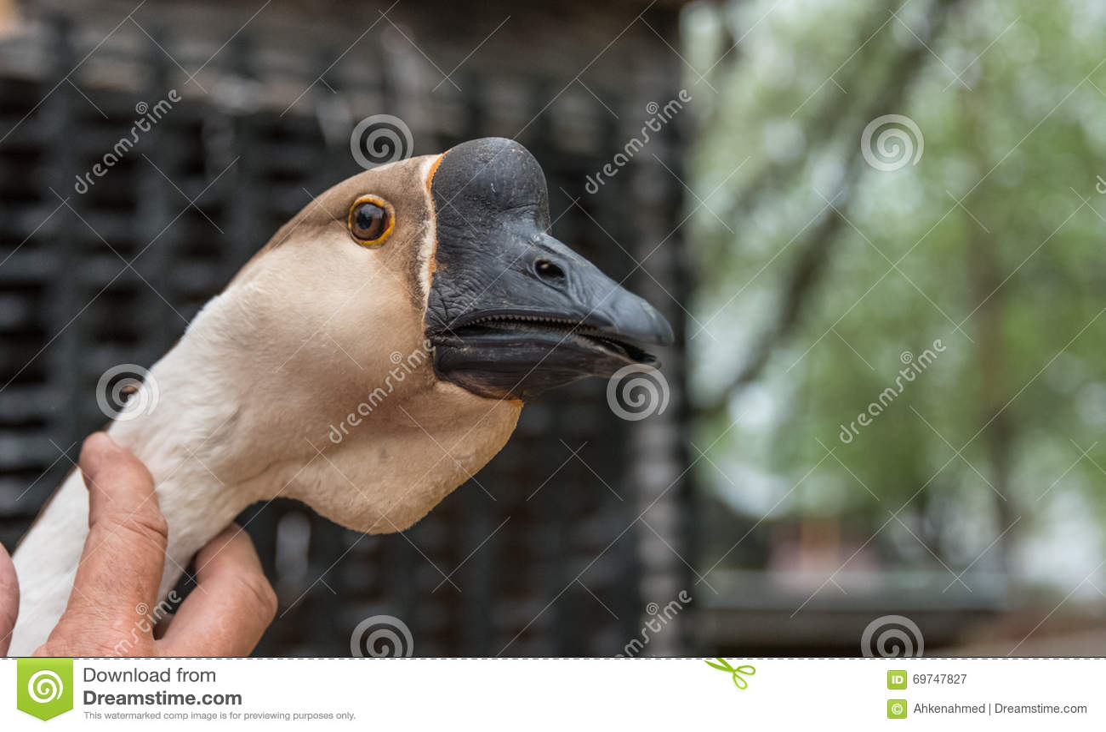 μεγάλο πουλί λευκό άνδρες