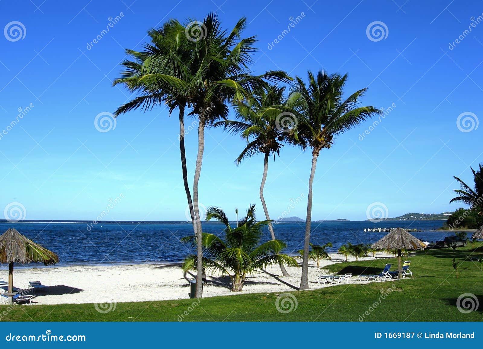 ευθυγραμμισμένος νησί φοίνικας παραλιών