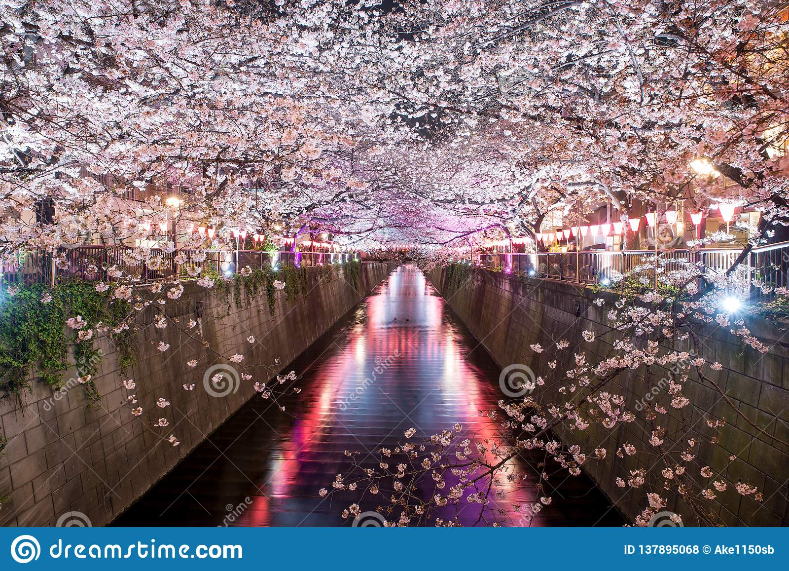 Ευθυγραμμισμένο κανάλι Meguro κερασιών άνθος τη νύχτα στο Τόκιο, Ιαπωνία Άνοιξη τον Απρίλιο στο Τόκιο, Ιαπωνία