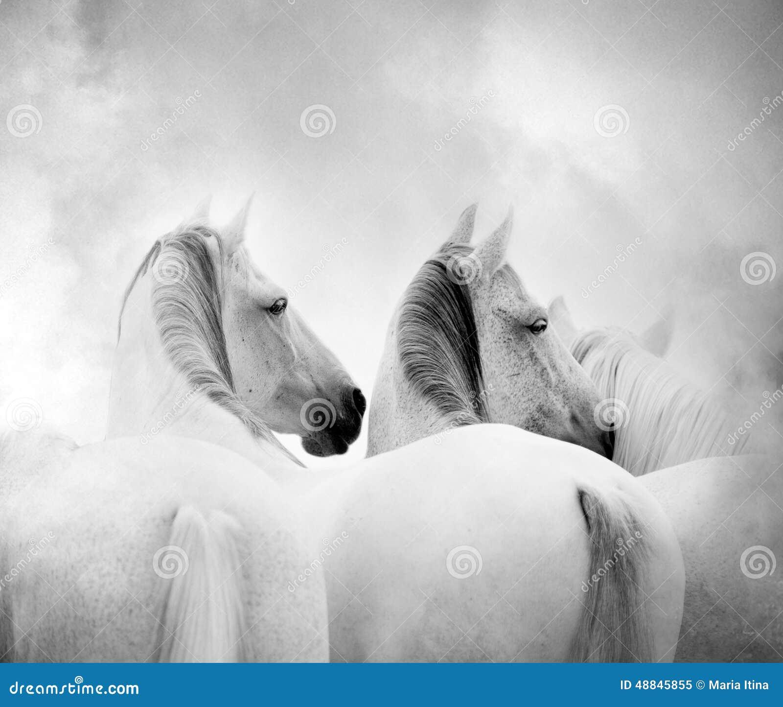 λευκό αλόγων