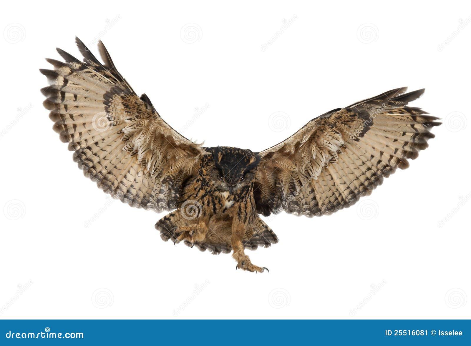Δωρεάν. Μεγάλο πουλί γκόμενα n μικροσκοπικά, Γρήγορη σέξι.