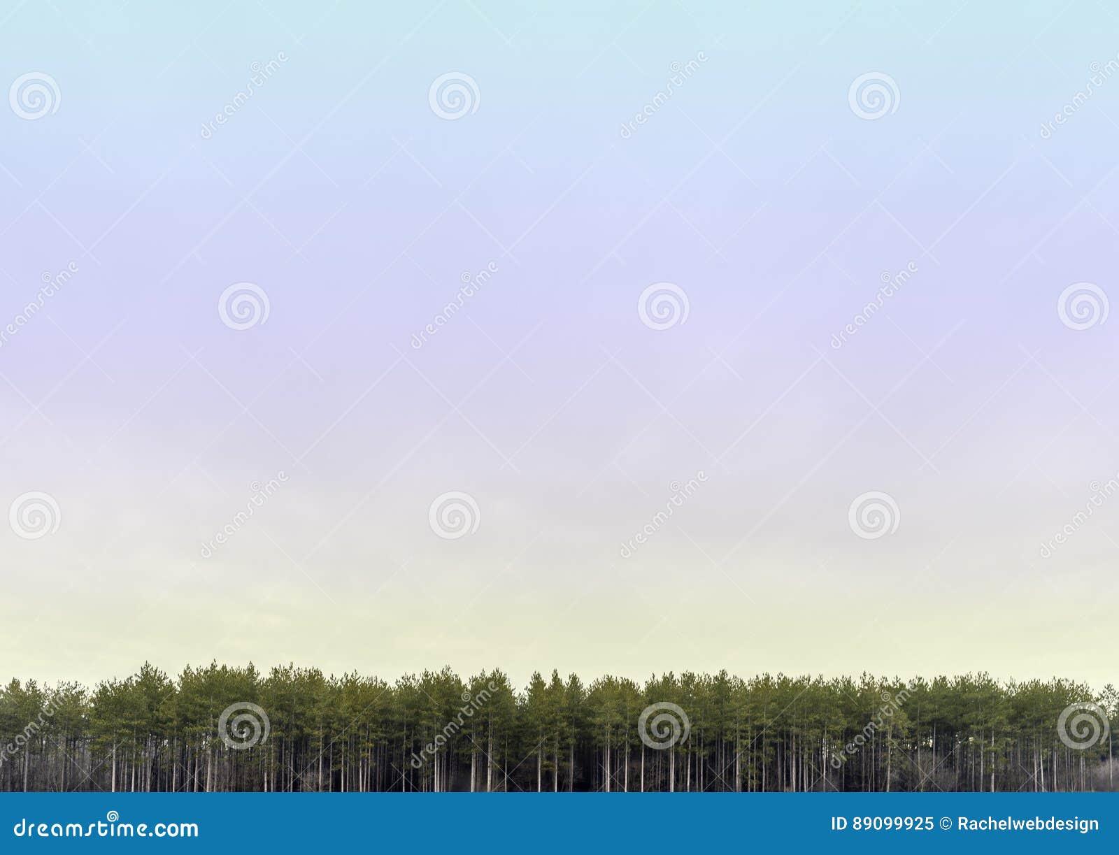 Ευρεία ανοικτή κρητιδογραφία που χρωματίζεται skyscape με τη γραμμή ψηλών δέντρων α πεύκων