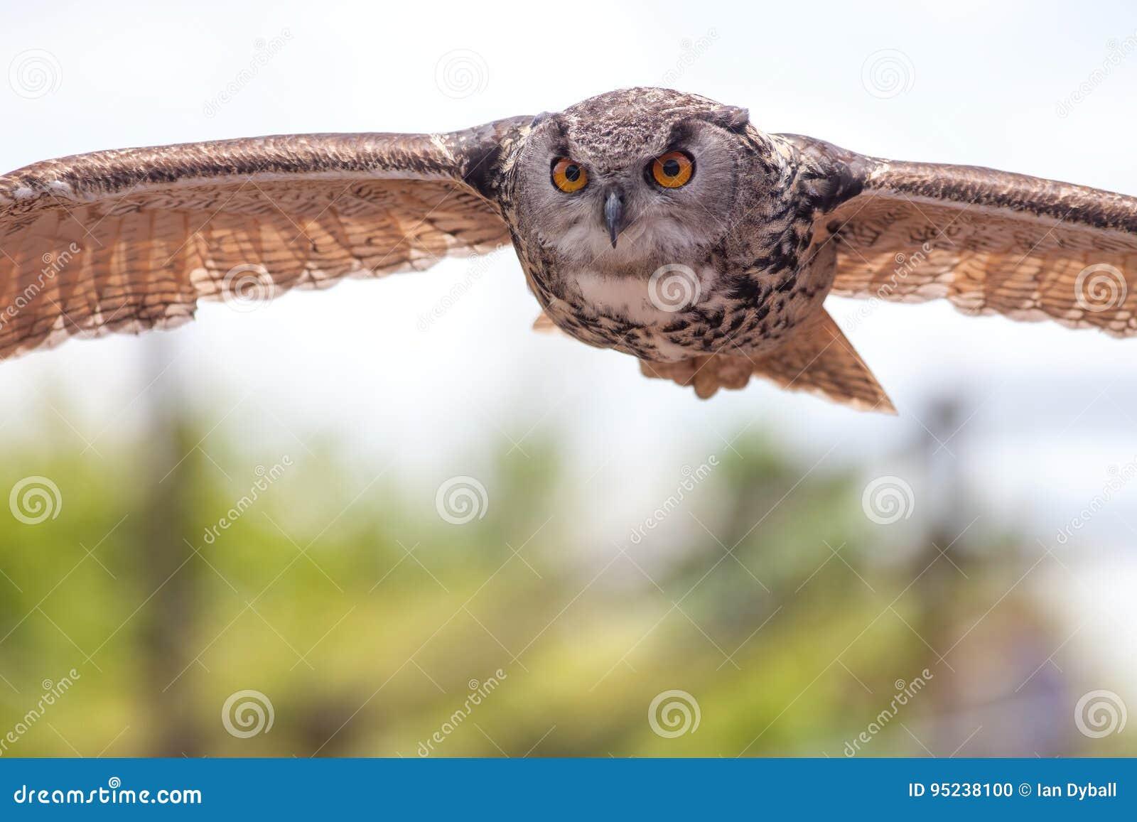 μεγάλο πουλί κυνήγι