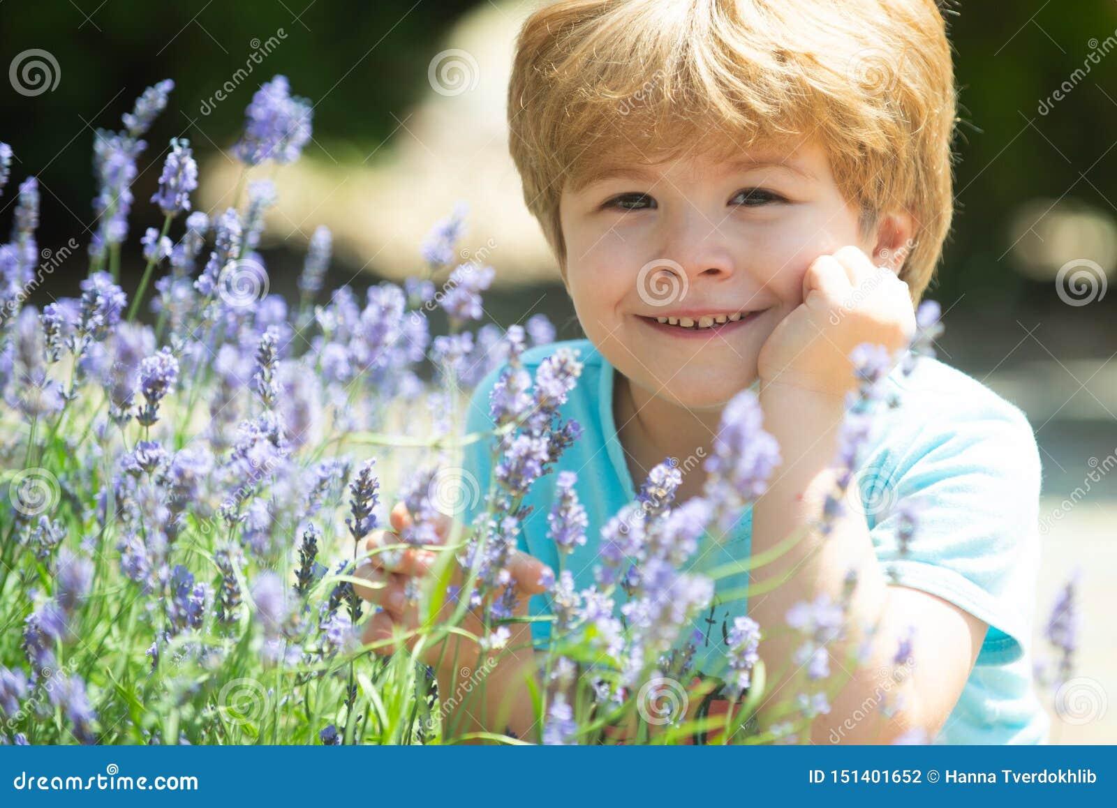 Ευτυχές παιδί lavender στους θάμνους E Φρέσκο lavender Ένα παιδί στη φύση Χλόη υπολοίπου Όμορφο φρέσκο καλοκαίρι
