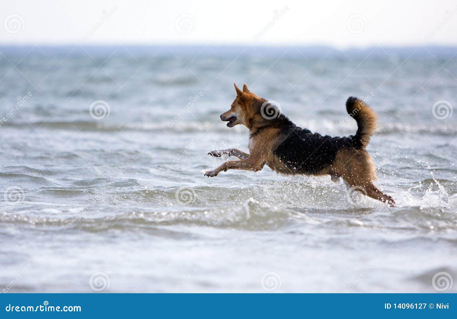 ευτυχές τρέξιμο σκυλιών