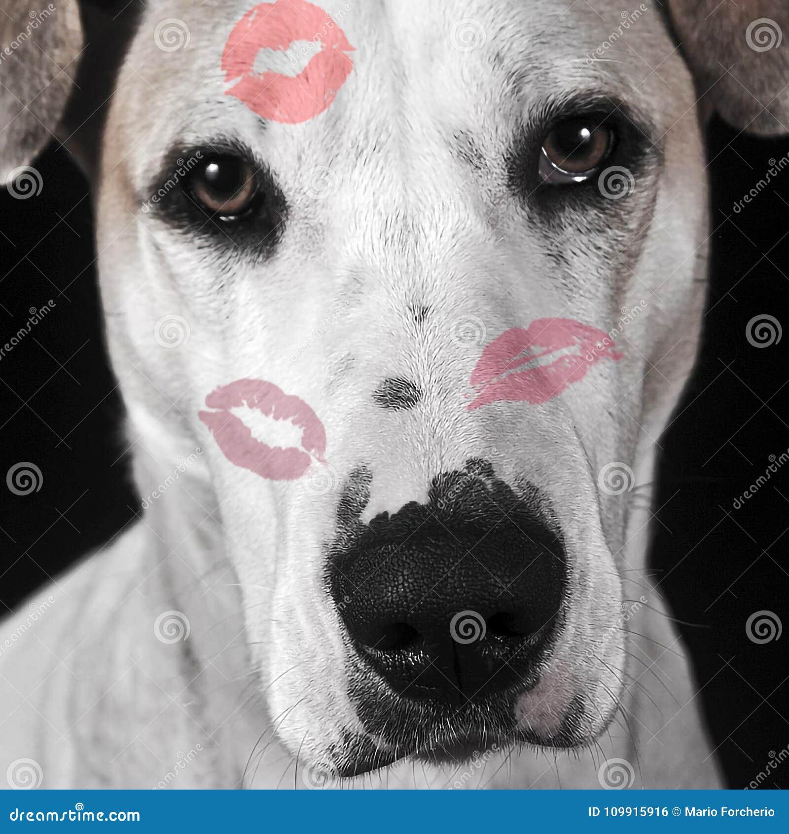ευτυχής s βαλεντίνος ημέρ&alp Πορτρέτο ενός σκυλιού με τα φιλιά κραγιόν