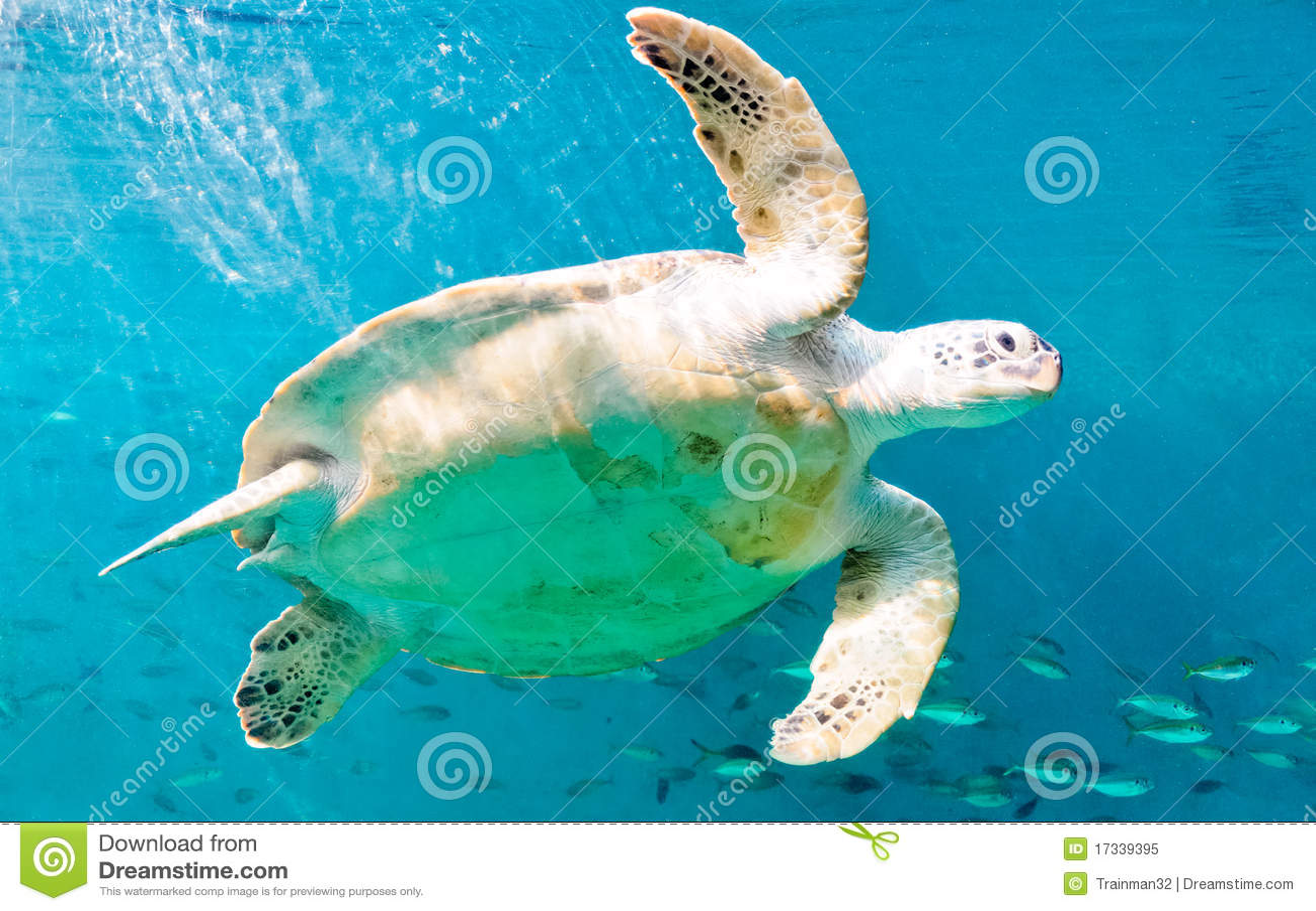 ευτυχείς χελώνες θάλα&sigma