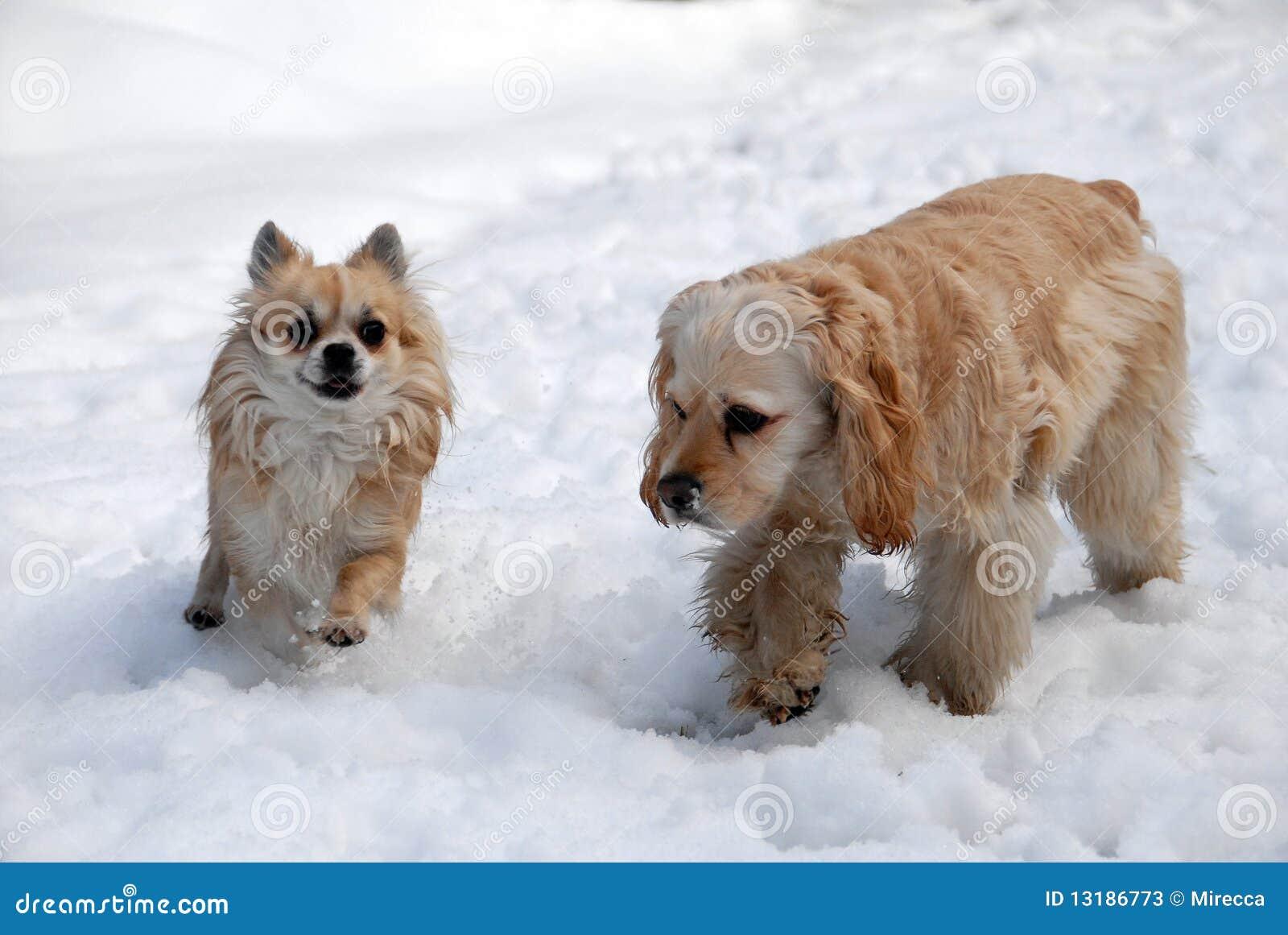 εύθυμο χιόνι δύο σκυλιών