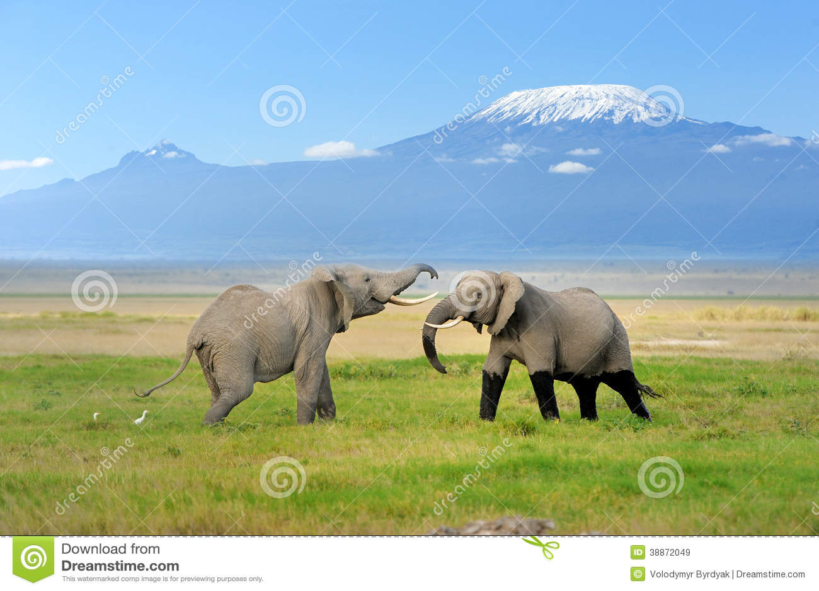 Ελέφαντας με το όρος Κιλιμάντζαρο
