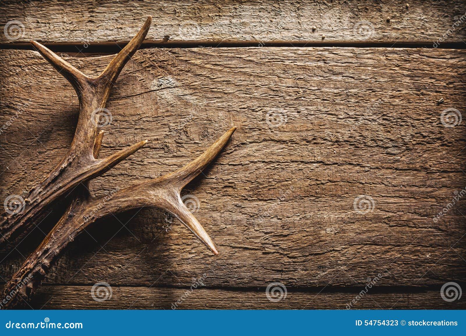Ελαφόκερες ελαφιών στην ξύλινη επιφάνεια
