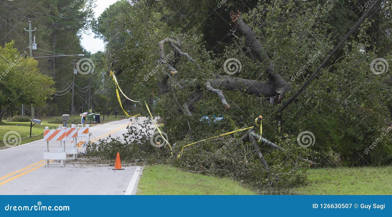 Ζημία της Φλωρεντίας τυφώνα στα ηλεκτροφόρα καλώδια στο Βορρά Carolin Wagram