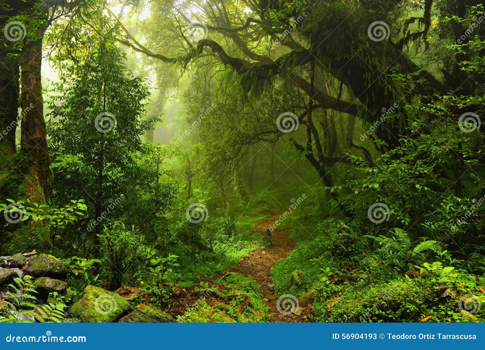 Ζούγκλα του Νεπάλ