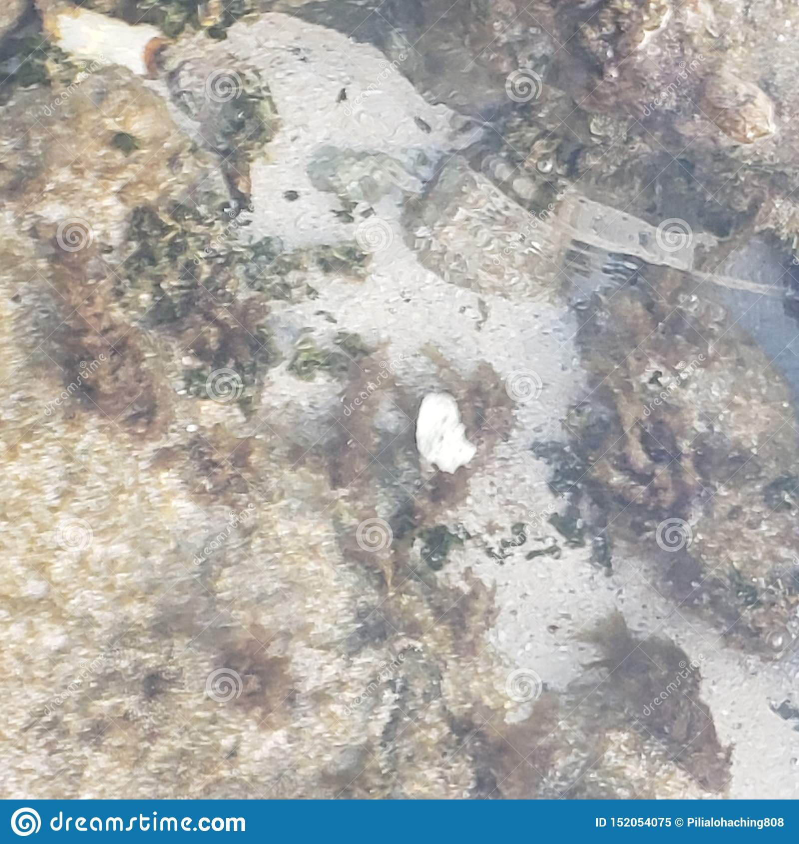 Ζωή θάλασσας στη Χαβάη