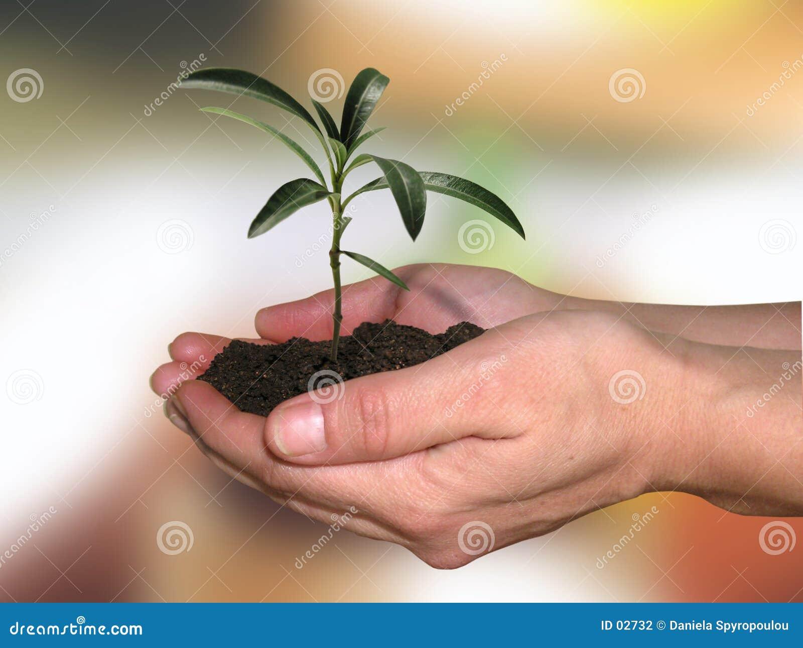 Download ζωή νέα στοκ εικόνες. εικόνα από καλλιέργεια, εύθραυστος - 2732