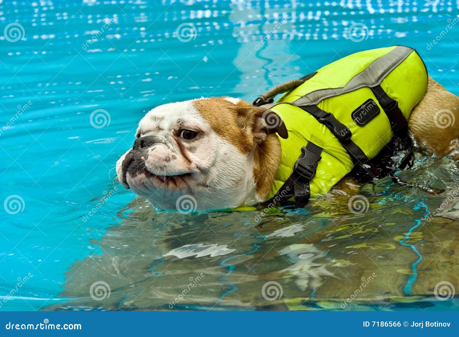 ζωή σακακιών σκυλιών
