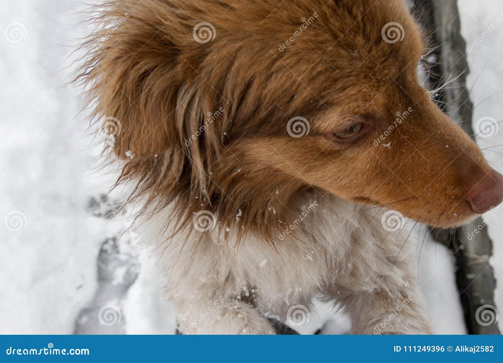 Ζωή σκυλιών - η χαρά βγαίνει στο χιόνι, προσωπική προοπτική