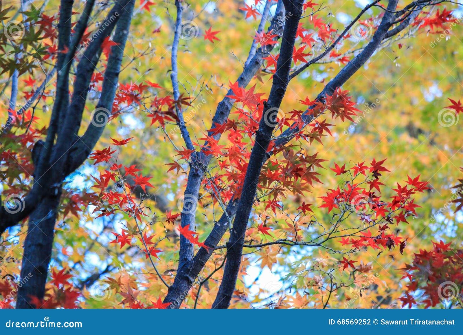 Ζωηρόχρωμα δέντρα στην περίοδο φθινοπώρου