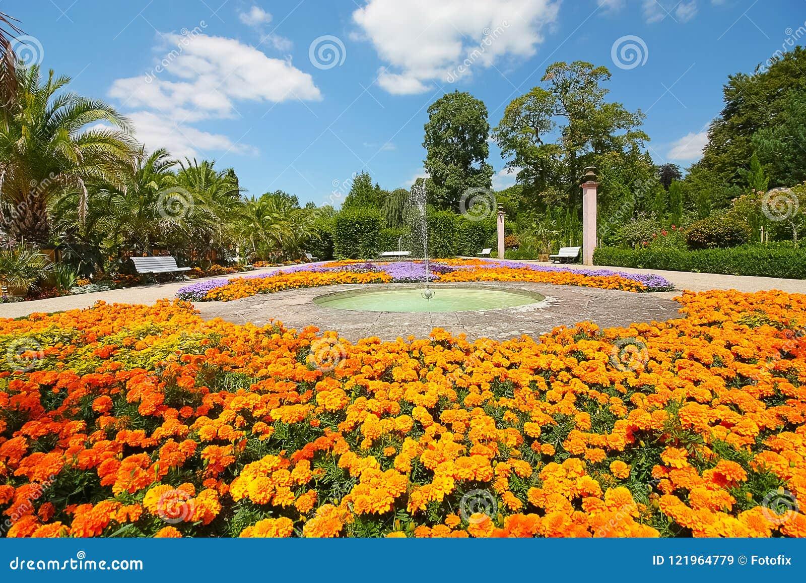 Ζωηρόχρωμα λουλούδια σε ένα πάρκο με τους φοίνικες