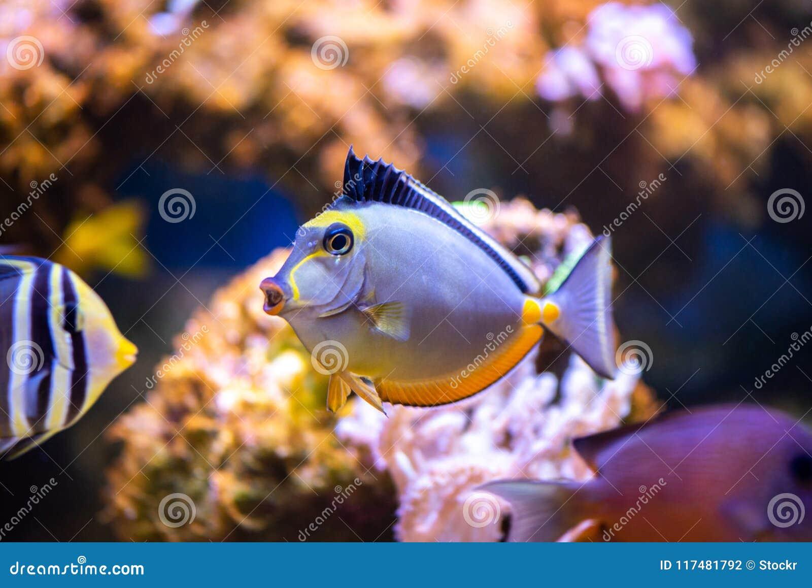 Ζωηρόχρωμα τροπικά ψάρια