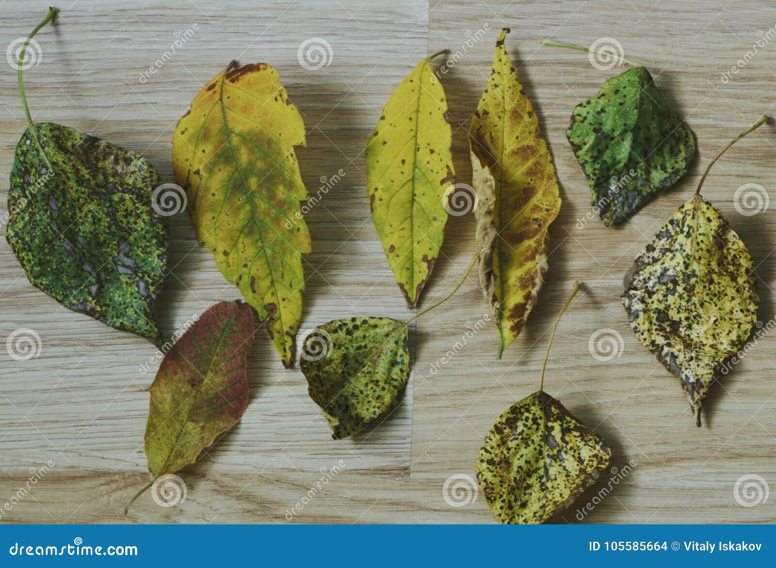 Ζωηρόχρωμα φύλλα φθινοπώρου στο κρύο μπλε νερό με τις αντανακλάσεις ήλιων, χρυσοί κυματισμοί Η έννοια του φθινοπώρου έχει έρθει