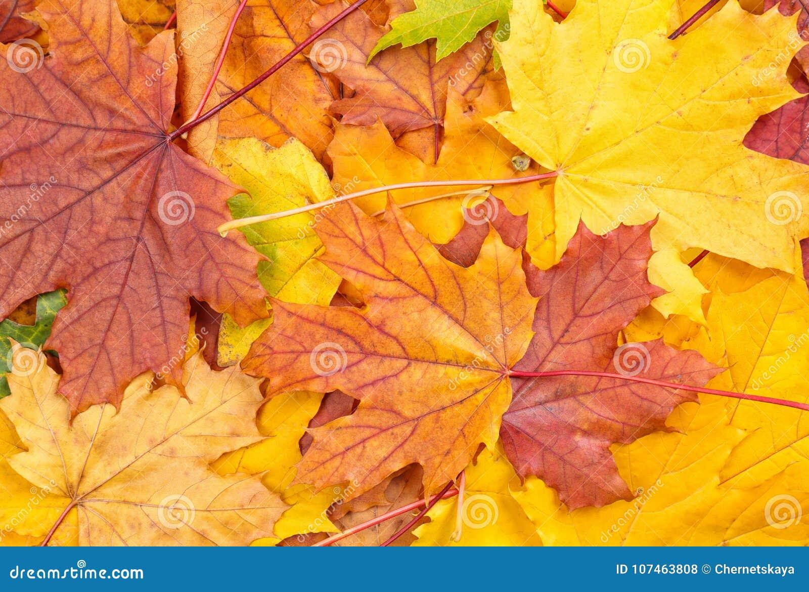 ζωηρόχρωμα φύλλα φθινοπώρ&omicr