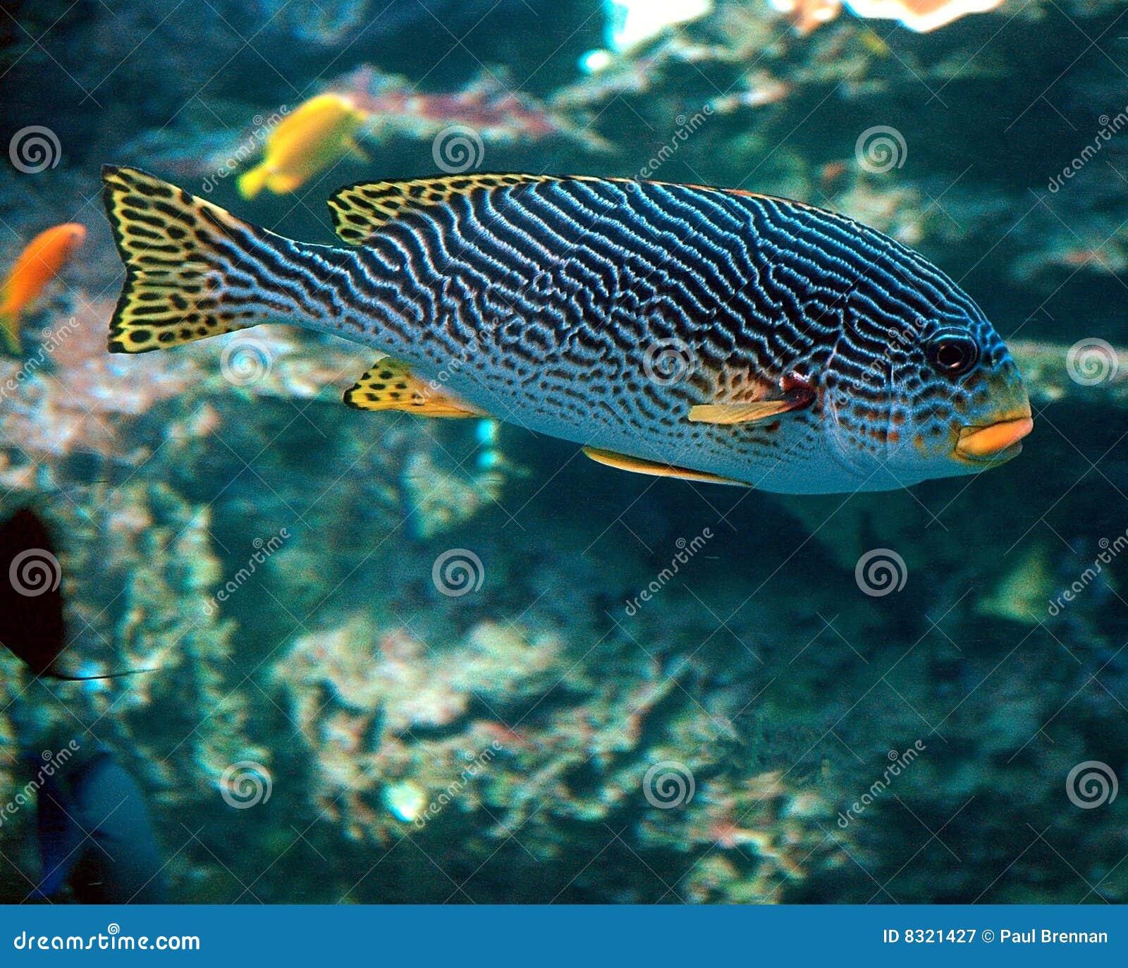 ζωηρόχρωμα ψάρια τροπικά