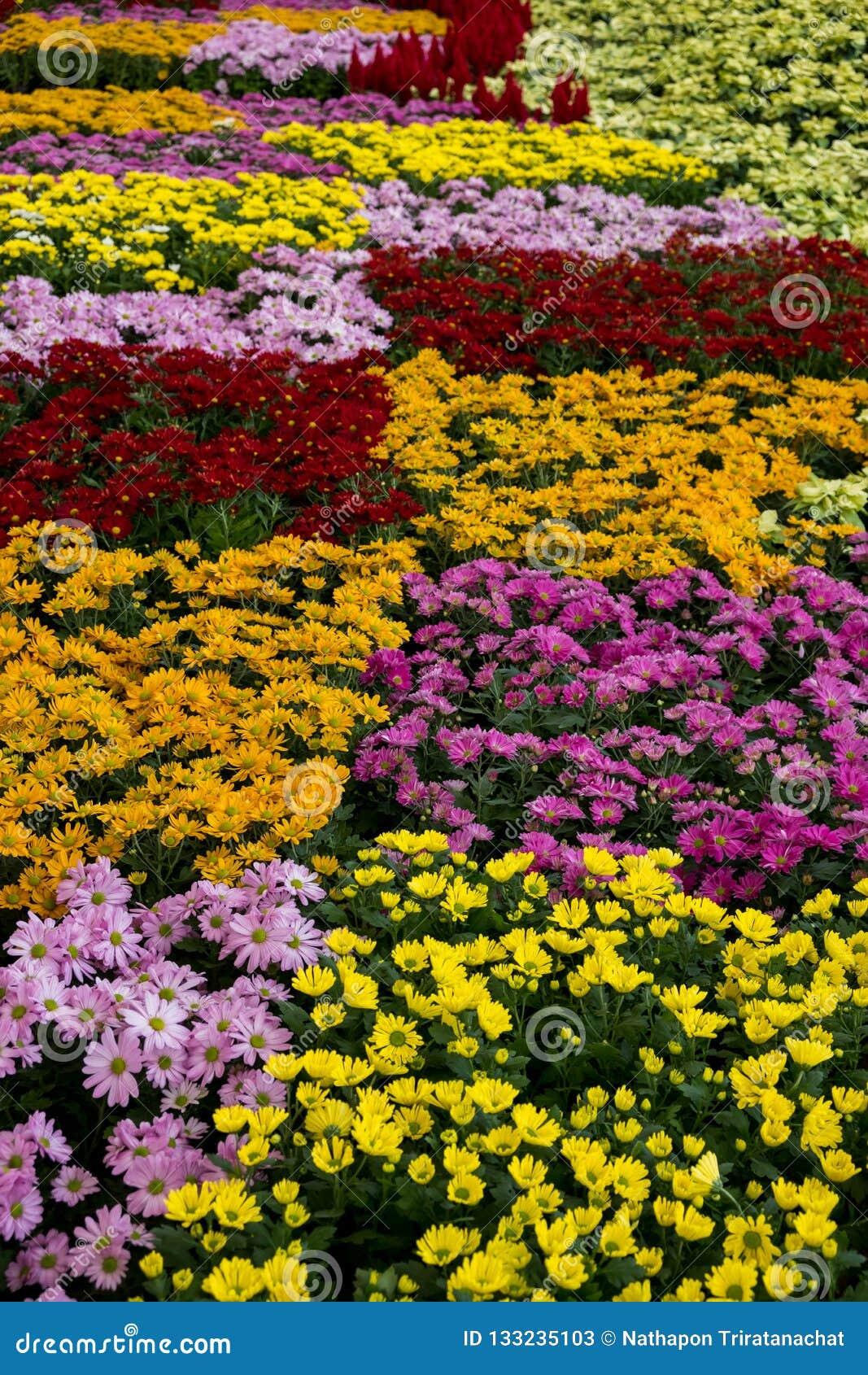 Ζωηρόχρωμες επιδείξεις λουλουδιών στη στοά Dasada, Prachinburi, Ταϊλάνδη