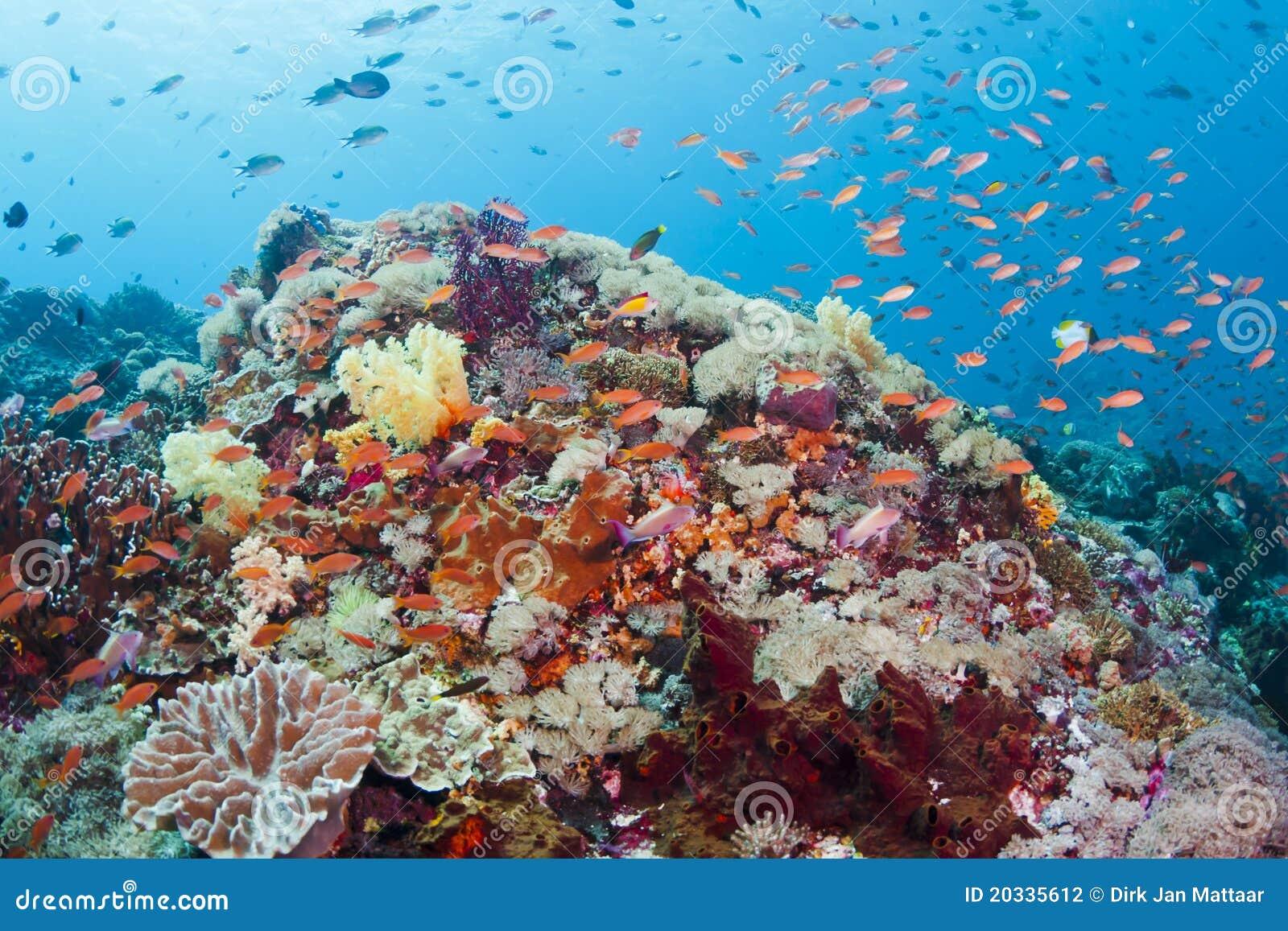 ζωηρόχρωμη κοραλλιογεν