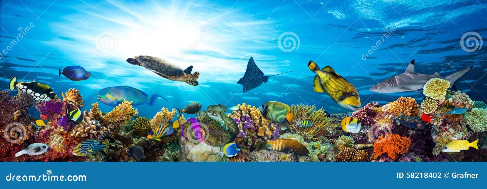 Ζωηρόχρωμη κοραλλιογενής ύφαλος με πολλά ψάρια