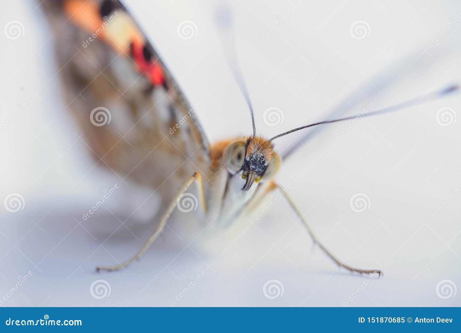 Ζωηρόχρωμη πεταλούδα σε ένα άσπρο υπόβαθρο r