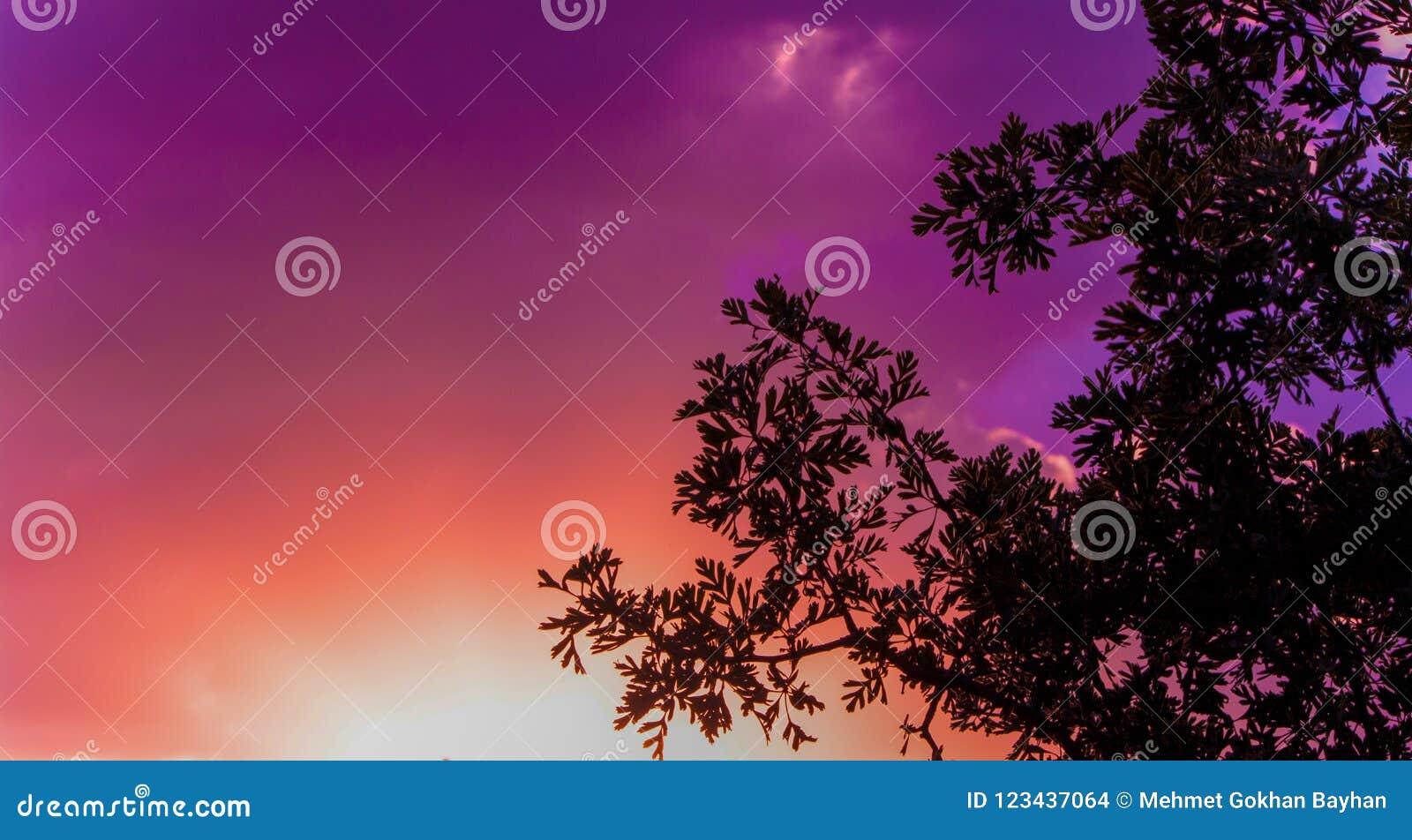 Ζωηρόχρωμοι ουρανός και σύννεφα ηλιοβασιλέματος με τη σκιαγραφία ενός δέντρου