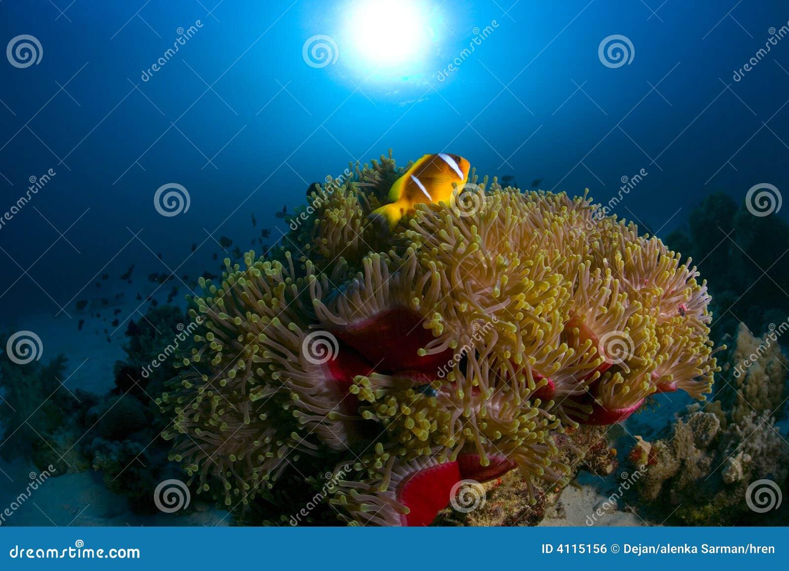 ζωηρόχρωμος σκόπελος ψα&