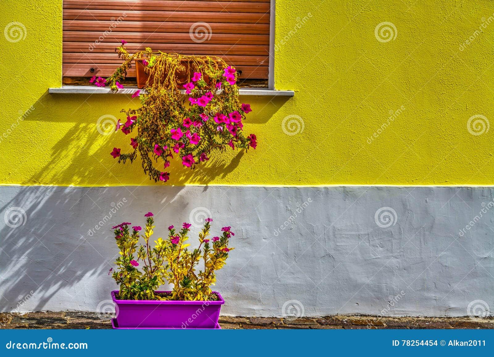 Ζωηρόχρωμος τοίχος με τα δοχεία λουλουδιών