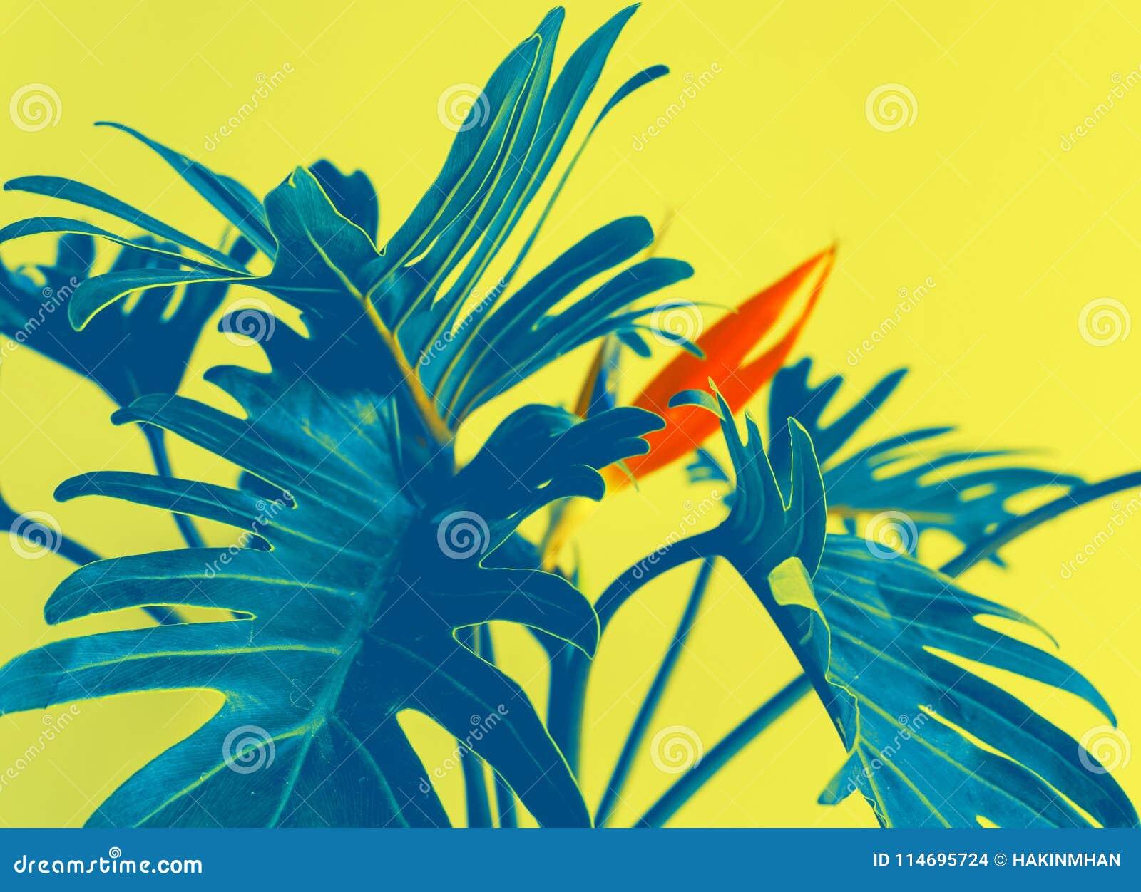 Ζωηρόχρωμος των εξωτικών τροπικών φύλλων strelizia και xanadu λουλουδιών