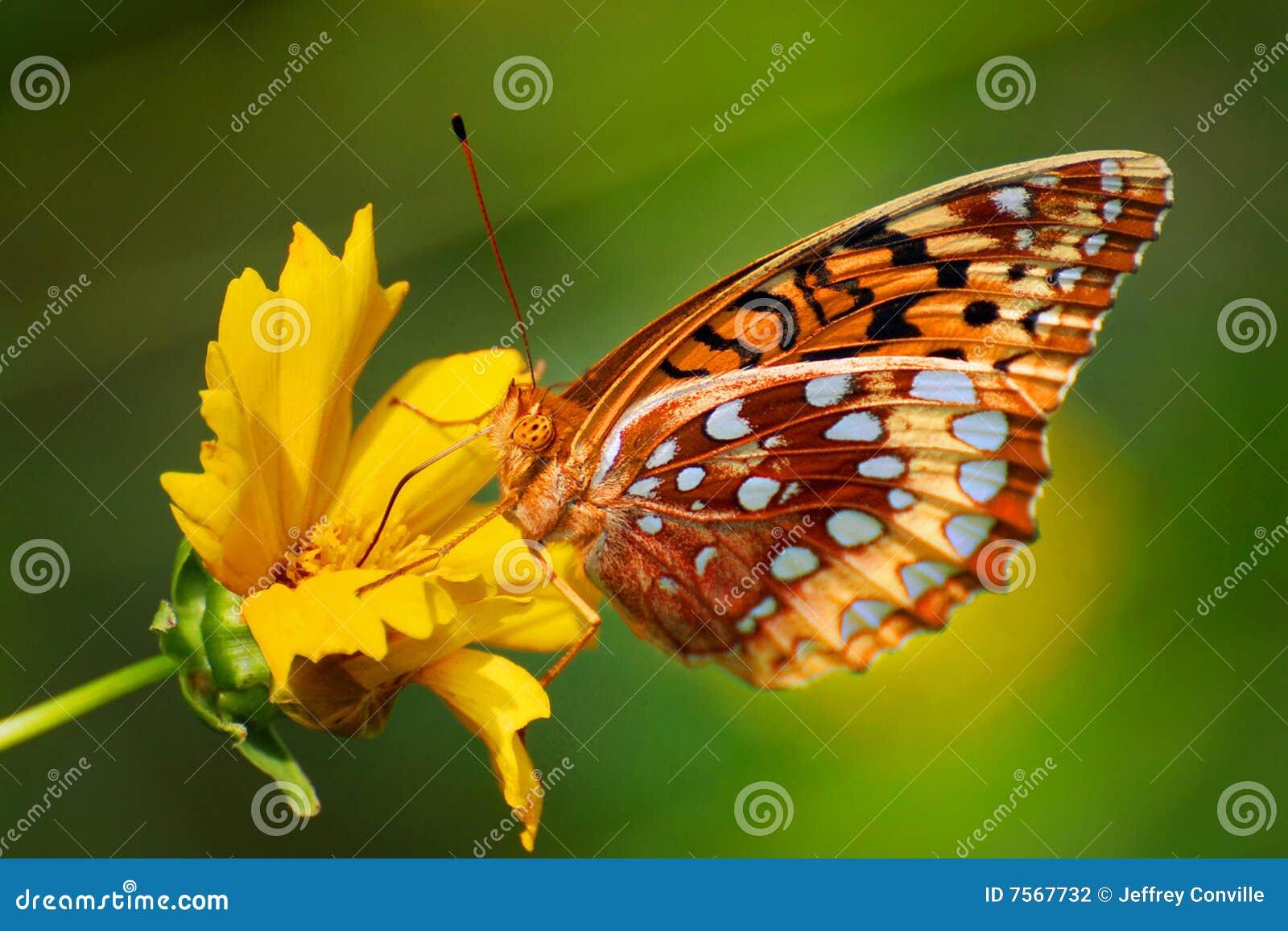 ζωηρόχρωμο λουλούδι πε&tau