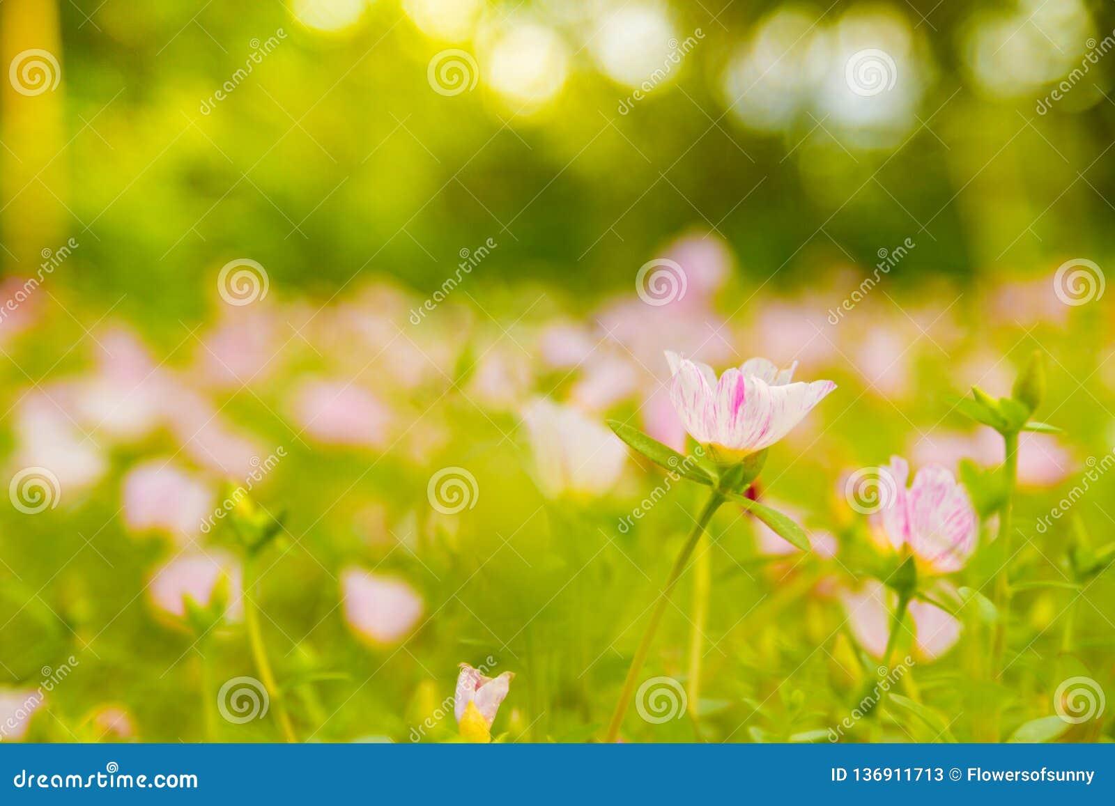 Ζωηρόχρωμο ρόδινο λουλούδι στον όμορφο κήπο
