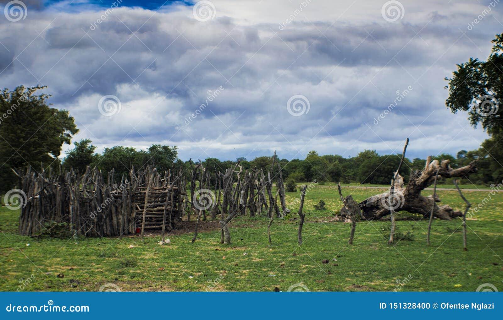 Ζωικό κεφάλαιο Kraal της Αφρικής